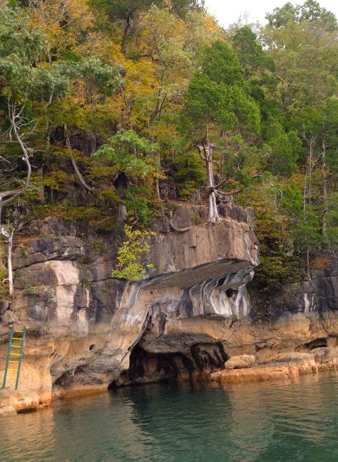 Long cedar clings to a rock ledge