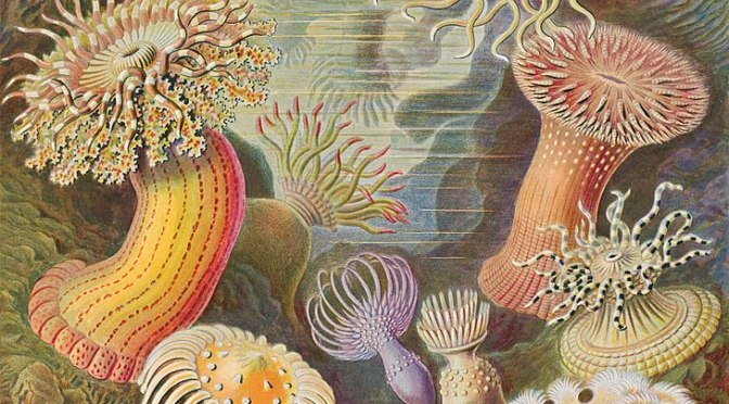 Ernst Haeckel's Sublime Drawings of Flora and Fauna: The Beautiful Scientific Drawings That Influenced Europe's Art Nouveau Movement (1889)