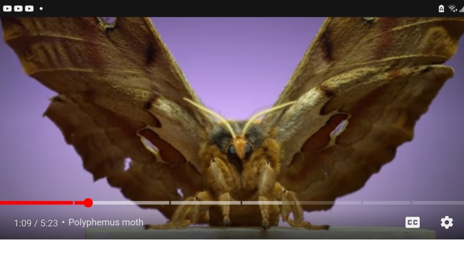 Witness the majesty of moths taking flight at 6,000 frames per second